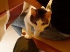 娘の愛猫「チビ」