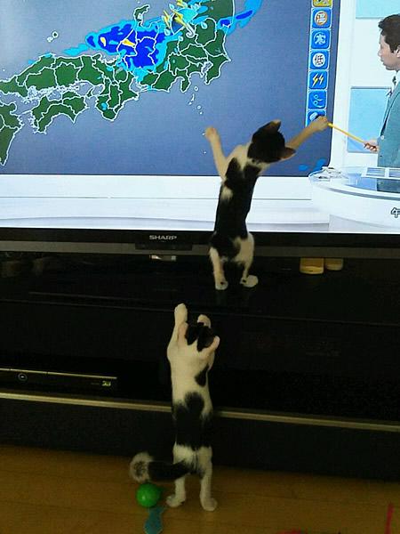 Yさんのネコたち