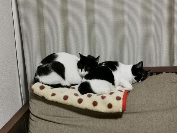 ふたりでお昼寝