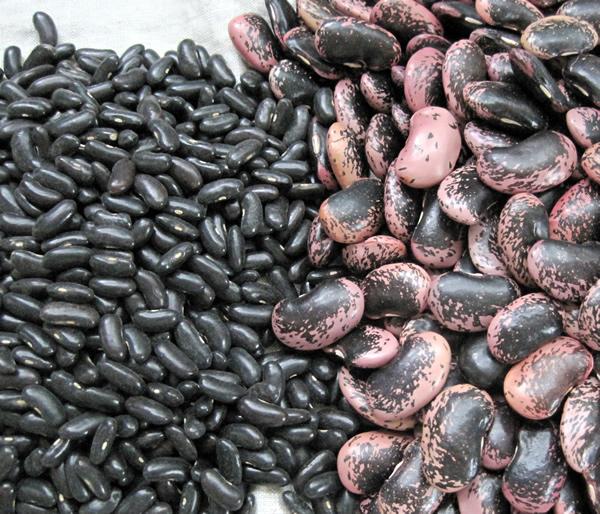 黒ささげ(黒小豆)と花豆