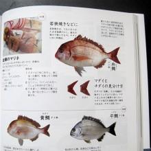 血鯛のページ(からだにおいしい 魚の便利帳)