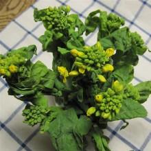 花瓶の中で出番を待つ菜の花